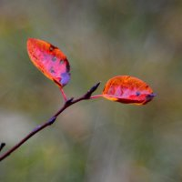Осень, осень... #6 :: Андрей Вестмит