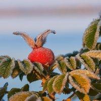 засахаренные ягоды 2 :: Galina