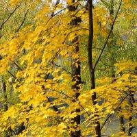 Листья золотые устилают сад... :: Ольга