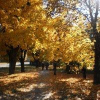Фотосессия с жёлрыми листьями :: Наталья Тимошенко