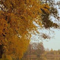 Желтые ноты сезона :: sorovey Sol