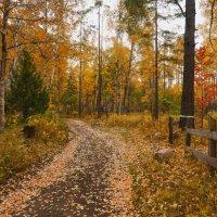 По лесной дорожке :: Ольга Литвинцева