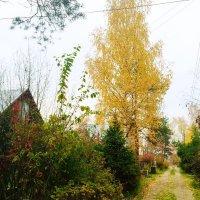 Осень на даче :: Наталья Александрова