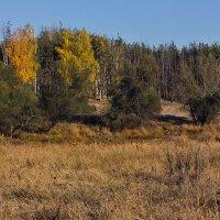 осень.краски природы. :: Геннадий Свистов