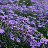 Осенние цветы :: Cvetok Lotosa {Елена}
