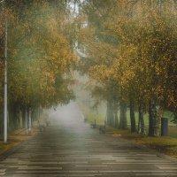 Туманное утро в парке :: Oxana Schneider