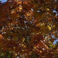 Осень золотая :: Владимир Ракитин
