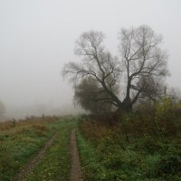 Утро туманное. :: Sergey Serebrykov