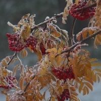 Зима, как всегда без предупреждения! :: Polina Polina