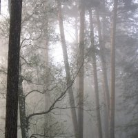 Туманное.... :: Валерия  Полещикова