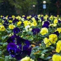 Городские цветы... :: juriy luskin