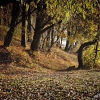"""ковры из леса :: PHOTO COMPOSITION """" FOC """""""