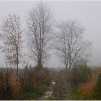 Осенний туман (2). :: Владимир Валов