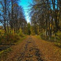 подмосковье осень. листва облетела. :: юрий макаров
