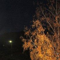 Золотая берёзонька в ночи. :: Мила Бовкун