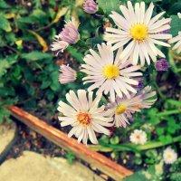 цветы :: Katrin konareva