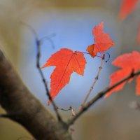 Последние краски осени :: Андрей Куприянов