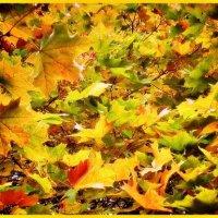 На ковре из желтых листьев.... :: Ирина Князева