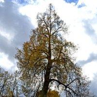 Дерево :: Наталья Левина