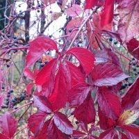 Плоды и листья :: Galina194701