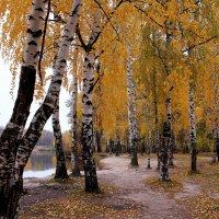 Полюбуюсь тобою, Осень. Поброжу меж твоих берёз :: Татьяна Ломтева