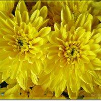 Осенняя нежность :: Лидия (naum.lidiya)