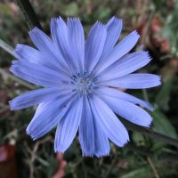 Цветок :: Яна Чепик