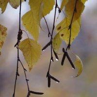 Осенние слезки :: Ната Волга