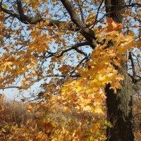 листья клёна 2 :: Александр Рождественский