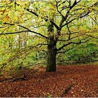 Фотограф в осенем лесу.:) :: Валерия Комова