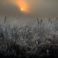 Сквозь тернии к рассвету.. :: Андрей Войцехов