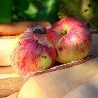 Яблоки на дровах :: Kov66