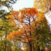 Осень в Питере :: Дашка Adms