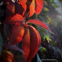Ловим лучи уходящего летнего солнца... :: Мадина Девеева