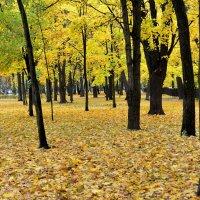 Желтое и черное :: Николай Танаев