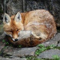 zoo :: Ангелина Смолина