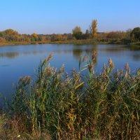 Осенний пруд :: Татьяна Черняева