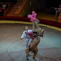 На арене цирка :: Наталья Rosenwasser