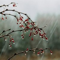 В каплях дождя... :: Олег Попов