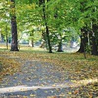 Митрополичий парк :: Степан Карачко