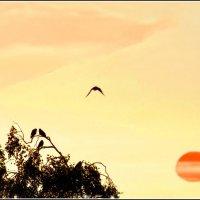 Клонится к закату :: Валерий Талашов