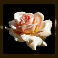 Цветы солнца 14.2 :: Владимир Хатмулин