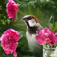 в цветах :: linnud