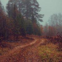 Осень в лесу... :: Федор Кованский