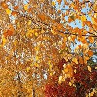 Сквозь листву осени :: Лидия (naum.lidiya)