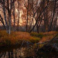 В рыжем берега... :: Roman Lunin