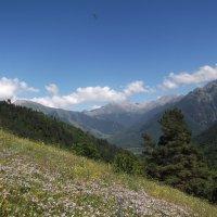 Альпийские луга :: Татьяна Ковалева