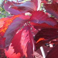 Осенние раскраски... :: Тамара (st.tamara)