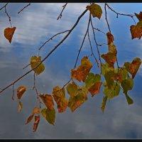 Autumn sadness of nature :: Татьяна Кретова