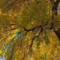Осень :: Ирина Краснобрижая